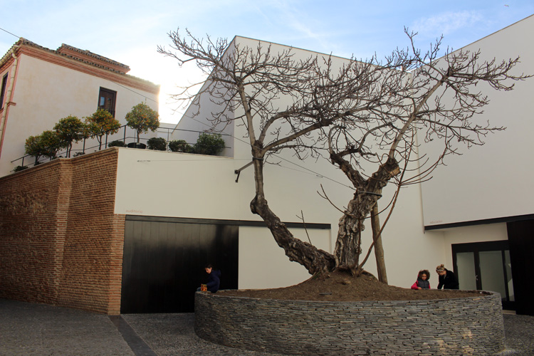 Encina Museo Picasso Málaga